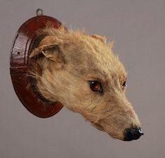 Victorian taxidermy dog head.