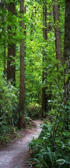 Woodlands                                                                                                                                                                                 More