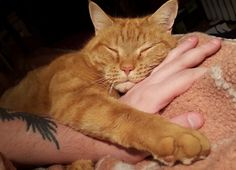 Ginger Cat Traveled Half a Mile to Be with Man He Befriended