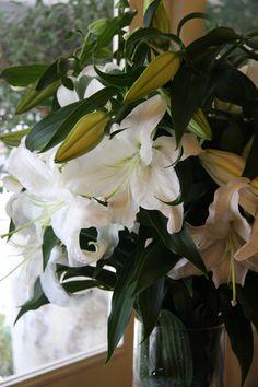 oriental lily Casablanca