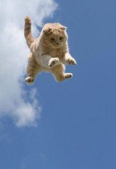 100 Fotos, die beweisen, dass Katzen das süßeste Tier der Welt sind – Cute a… 100 photos that prove cats are the cutest animal in the world – Cute af ♡ – prove Cutest Animals On Earth, Cute Baby Animals, Animals And Pets, Funny Animals, Funny Cats, Cats Humor, Funny Horses, Wild Animals, Farm Animals