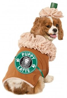 Iced Coffee Dog Costume for Velvet.