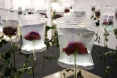 The stalks of these flowers are already dried up, but their blossoms are preserved and kept fresh by the medical infusion bags.