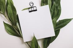 Blank white paper with black paperclip decorated with green leaves on white background Free Photo Palm Background, White Background Photo, Background Patterns, Church Backgrounds, Photo Backgrounds, Wallpaper Backgrounds, Instagram Background, Instagram Frame, Vintage Typography