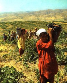 workers-in-the-vineyard