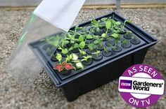 Get plants for free! Take cuttings from existing plants and pop them in a Hydropod propagator until rooted, then pot-on like a normal plant. Constantly mists cuttings to reduce the risk of damping-off, drying out . Kitchen Garden Magazine, Antirrhinum, Potato Vines, Grow Bags, Plant Cuttings, Chelsea Flower, Flower Show, Growing Plants, Gardening Tips