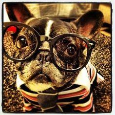 'Nerd Alert!', French Bulldog in Geek Glasses.