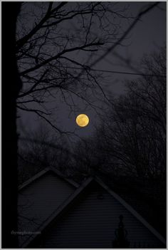 I am sitting here at my old pine table looking out my kitchen window at the hillside of trees that tumble down to the river below. Night Whispers, Pine Table, Missouri, Natural Beauty, Most Beautiful, Landscapes, Moon, Touch, Spring