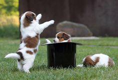 ok, stay down...1 2 3...abracadabra!!!