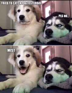 Dog Puns - Funny Dog Quotes - Dog Puns The post Dog Puns appeared first on Gag Dad. Funny Animal Jokes, Dog Quotes Funny, Cute Funny Animals, Funny Animal Pictures, Funny Dogs, Cute Dogs, Funny Memes, Funny Shit, Funny Husky