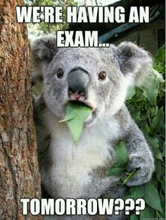 Good luck with final exams!