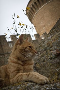 This looks like it was taken at Castel Sant'Angelo in Rome. So I'll call this pin Roman kitty.