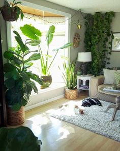 A photo showing a room with a bay window surrounded by plants of various types. There are two cats sleeping on a rug directly in front of the window, showing that they don't care about the plants around them. House Plants Decor, Plant Decor, Plant Aesthetic, House Plant Care, Bedroom Plants, Hanging Plants, Indoor Window Plants, Indoor Plant Wall, Decoration