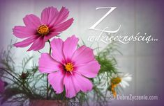 Low Cost Flowers Shipping And Delivery - An Anniversary Reward Without A Significant Selling Price Tag Z Wdzicznoci. Aster, Good Day, Anniversary, Flowers, Garden, Home, Plants, Buen Dia, Good Morning