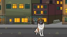 A Clever St Bernard Dog With Blocks Of Neighboring Apartment Buildings Background:  A big dog with light brown white and black fur sits on the floor to rest mouth parted to expose a long light pink tongue and A block of residential buildings with multicolored facade lighted rooms green glass windows gray road and pavement during a starry night