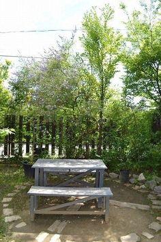 くるみの木
