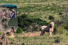 Day Safari in Africa, at Pumba Private Game Reserve in South Africa. Private Games, Game Reserve, South Africa, Safari, Wildlife, Park, Animals, Animales, Animaux