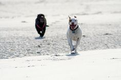 Don't Run Your Dog Into The Ground! Pet Dangers and Running With Your Dog