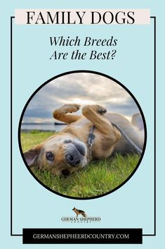 Looking for the perfect family dog but not sure which breed to get?  Learn more about choosing a dog and a breed that will best suit your family. 🐾 #dogbreedseasytotrain #dogbreedsbig #dogbreedssmall #dogbreedsforfamilys #smalldogbreeds #dogbreedscute #dogbreedsmedium #familydogbreedskids K9 Officer, Choosing A Dog, Purebred Dogs, Small Dog Breeds, Family Dogs, All Dogs, Dog Training, Your Dog, Dog Lovers