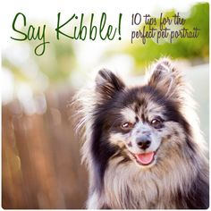 10 Tips for the perfect pet portrait