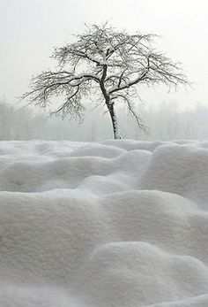 Snowy tree after the snowfall...
