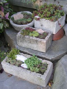 Hypertufa pots, planted with hardy sempervivums and sedums can be left outdoors year-round. instead of hypertufas use cement blocks