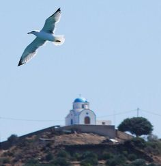 Fly High, Lipsi Greece Visit Greece, Greece Islands, Beautiful Islands, Lipsy, Wedding Locations, Planet Earth, Bald Eagle, Destinations, Greek