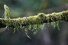 Une branche garnie