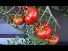 Gartenreport | Impressionen aus Beet und Glashaus
