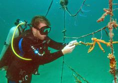 Members of the underwater bar association DiveBar are helping to restore a coral reef off the coast of Fort Lauderdale, Florida. The reef will be known as DiveBar Reef.  - ABA Journal