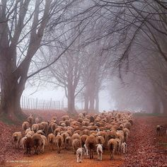 Back Home.......by Susan Van Zuilekom