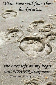 """While time will fade these hoof prints, while the ones left on my heart will never fade"""