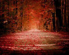 nature trees autumn (season) forest  / 1280x1024 Wallpaper