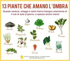 13 Piante che amano l'ombra Backyard Plants, Outdoor Plants, Outdoor Gardens, Garden Landscaping, Eco Garden, Garden Planters, Greenhouse Gardening, Vegetable Garden Planner, Growing Greens