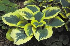 Plenty of information on hostas - very informative.