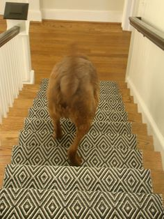 1000 images about stair runners on pinterest stair for Dash and albert runners