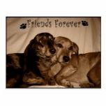 Friends Forever Postcard   miniture dachshund, chihuahua dachshund mix, long haired miniature dachshund #dachshundsofinstagrams #dachshundsaroundglasgow #dachshundslovers