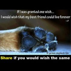 Share if you would wish the same...  #LoveDogs
