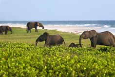 Gabon travel | Africa's Eden - Loanga national park, elephants on beaches and surfing hippos