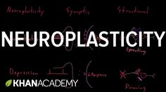 Neuroplasticity   Nervous system physiology   NCLEX-RN   Khan Academy