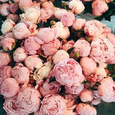 pink peonies at pike place market in downtown seattle