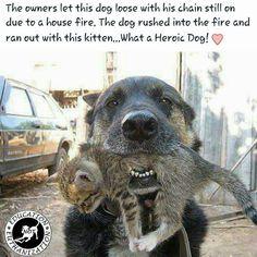 Awww. A hero!
