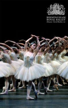 Swan Lake: Artists of Birmingham Royal Ballet; photo: Bill Cooper