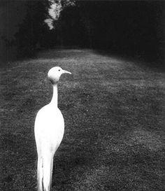 Bill Brandt. Beautiful photography.