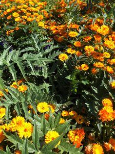 Garden, Plants, Garten, Lawn And Garden, Flora, Gardening, Outdoor, Plant, Gardens