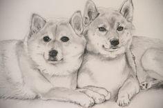 Tekening van twee prachtige honden Cody en Jessy De Akita honden afkomstig uit Japan, behorende tot de Aziatische keeshonden. Wij kennen dit prachtige hondenras van de film Hachi: A Dog's Tale met Richard Gere.