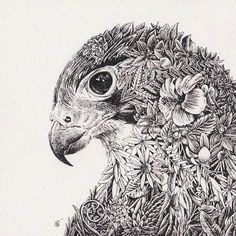 amazing drawings by Marini Ferlazzo. Tattoo Drawings, Art Drawings, Falcon Tattoo, Eagle Drawing, Floral Drawing, Bird Artwork, Animal Sketches, Amazing Drawings, Magazine Art