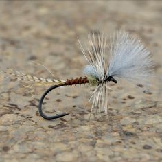 Green Drakes suck. Fishing this cripple when they are around sucks even more... . . . . . . . . . #trout #fishing #flytying #troutbum #flyfishing #thetugsthedrug #findyourwater #flyfishfood #bigbflies #featherflinger