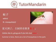 Nobody loves mosquitoes. They are small enemies to everyone and slender long-legged flies with aquatic larvaes. The bite of the bloodsucking female can transmit a number of serious diseases including malaria and elephantiasis. #mosquitoes #enemy #diseases #Mandarin #learnchinese #dailysentence #studymandarin #chineselanguage #chineselessons #onlinelearning #学习中文#Language #Education