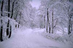 Lake City - Snowmobile Trail
